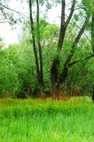 Green swamp field with trees Royalty Free Stock Photo