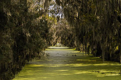 Green Swamp and Moss. Canal with Swamp and Spanish Moss forming a tunnel in Fl Royalty Free Stock Photos