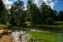 Green swamp Stock Photo