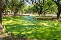 Green swamp Royalty Free Stock Photo