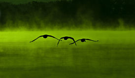 Green swan lake Stock Image