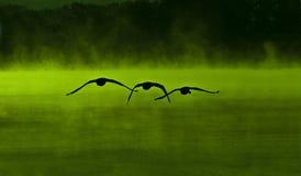 Green Swan Lake Stock Image