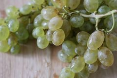 Green ripe grapes on wooden desk royalty free stock images