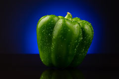 Green sweet pepper on blue background Royalty Free Stock Image