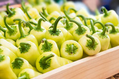 Green sweet pepper Royalty Free Stock Images