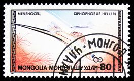 Green Swordtail Xiphophorus helleri, Tropical Fish serie, circa 1987. MOSCOW, RUSSIA - SEPTEMBER 26, 2018: A stamp printed in Mongolia shows Green Swordtail royalty free stock image