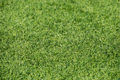 Green synthetic grass field detail Royalty Free Stock Photography