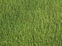 Green synthetic lawn as background stock images