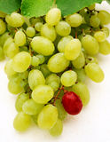 Green table grapes Royalty Free Stock Image
