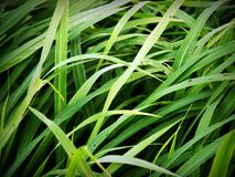 Green Tall Grass Stock Images