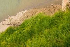 Green Tall Grass On Shoreline. Green Tall Grass Blowing In Wind Along Sandy River Shoreline royalty free stock photography