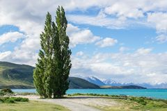 Green tall pine at deep blue lake side Stock Images