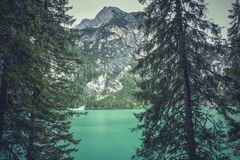 Green Tall Trees Near Body of Water Royalty Free Stock Photography