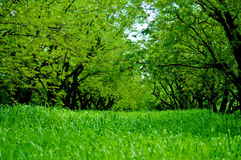 Green tamarine trees and green tall grass field Stock Photo