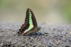 Green tape butterfly in water Royalty Free Stock Photos