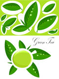 Green tea background. White cup of green tea and fresh tea leaves background. Vector illustration Stock Photos