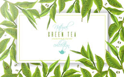 Green tea banner Royalty Free Stock Images