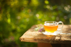 Green tea in beautiful cup Royalty Free Stock Image