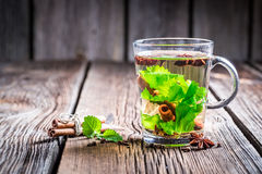 Green tea with cinnamon bark Stock Images