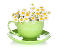 Green tea cup with camomiles Stock Images