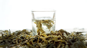 Green tea dried leaves with hot water shot Royalty Free Stock Photo