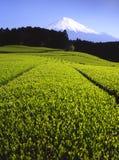 Green Tea Fields. Lush green tea fields with Mount Fuji Stock Image
