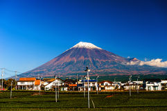 Green tea fields and Mount Fuji. Luscious green tea fields at the foot of Mt. Fuji Royalty Free Stock Images
