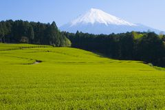 Green tea Fields VI. A sea of green tea with Mount Fuji Stock Image