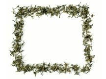 Green tea frame Stock Image