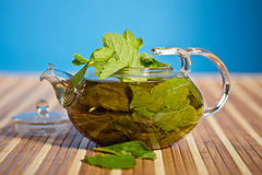 Green tea with fresh mint Stock Photography