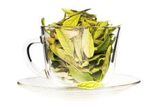 Green tea freshness stock image