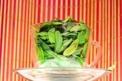 Green tea freshness stock photos
