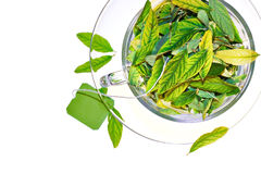 Green tea freshness stock images