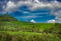 Green tea gardens hills with blue sky royalty free stock photos