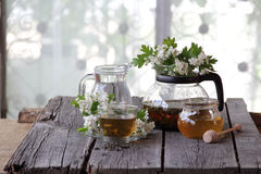 Green tea in a glass cup, honey and a branch of a blossoming haw Stock Photos