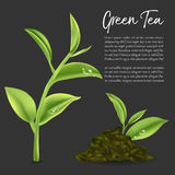 Green tea,Green tea leaf. Vector illustration Stock Images