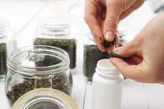 Green tea in herbalisma Royalty Free Stock Image