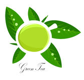 Green tea illustration. Green tea white cup and fresh tea leaves over white. Vector illustration Royalty Free Stock Photo