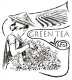 Green tea illustration Stock Image