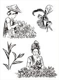 Green tea illustration Royalty Free Stock Images