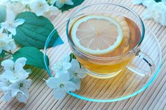Green tea with Jasmine and lemon. A Cup of green tea with Jasmine flowers and a slice of lemon stock photography