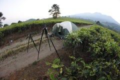 Green tea. On the kemuning, karanganyar, central java, tea field Stock Image