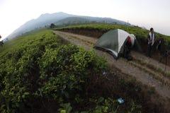 Green tea. On the kemuning, karanganyar, central java, tea field Stock Photos