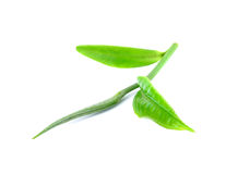 Green tea leaf isolated Royalty Free Stock Images