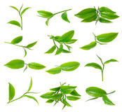 Green tea leaf Royalty Free Stock Photo