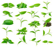 Green tea leaf Royalty Free Stock Photography