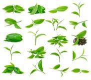 Green tea leaf Royalty Free Stock Photography