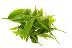 Green tea leaf isolated on white background Royalty Free Stock Image