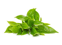 Green tea leaf isolated on white. Background royalty free stock photography