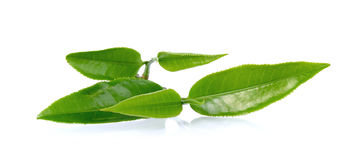 Green tea leaf  on white background Royalty Free Stock Photos